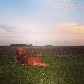 Millie at Sunset